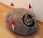 Cat's house with mushrooms